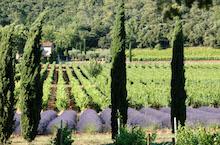 vin excursion aix en provence - provencewinetour